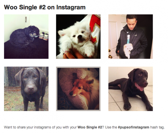 Instagrams for the #pupsofinstagram hashtag (puppies are cute, right?).
